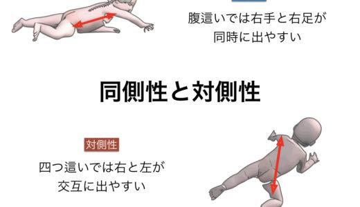 """体幹における""""同側性""""と""""対側性"""""""