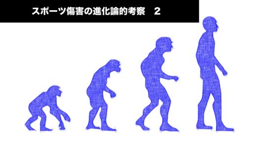 スポーツ傷害における進化論的考察 2